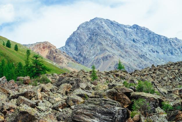 岩のある高地の針葉樹
