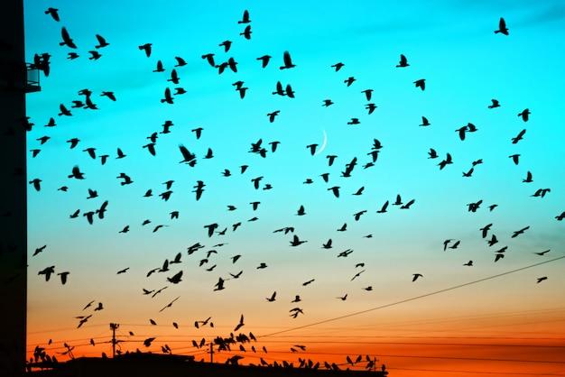 月の背景に日没で屋根の上を飛んでいる鳥のグループ。