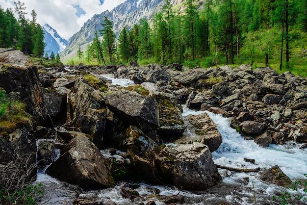 大きな湿った石のある野生の山の小川の氷河からの素晴らしい速い水の流れ。