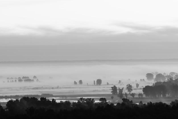 Мистический взгляд на лес под помохом на раннем утре в серой шкале.