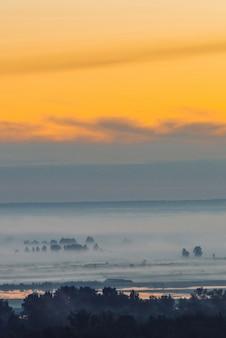 Мистический взгляд на лес под дымкой в рано утром. туман среди силуэтов деревьев под предрассветным небом.