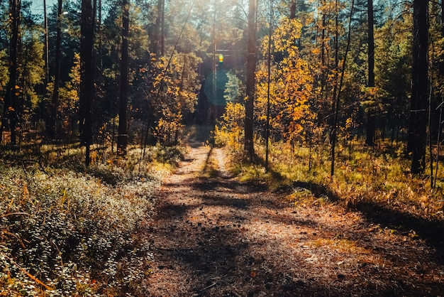 Удивительный живописный пейзаж рано утром в осеннем лесу. в солнечных лучах.