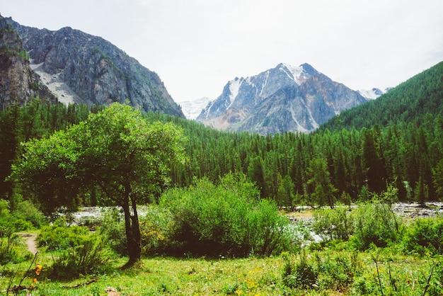 Малый кедр против заводи горы в долине против гигантского утеса.