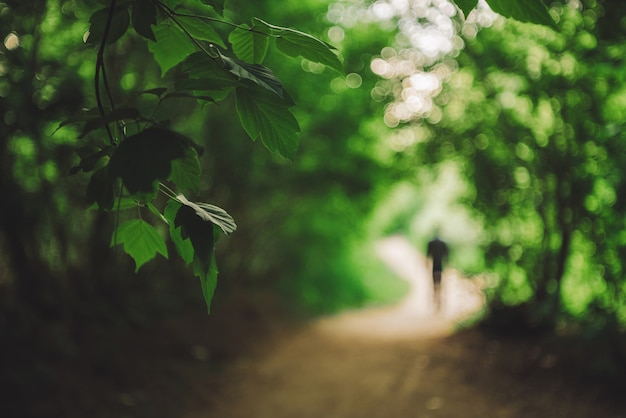 背景をぼかした写真の木の鮮やかな葉。男はボケの森を歩く