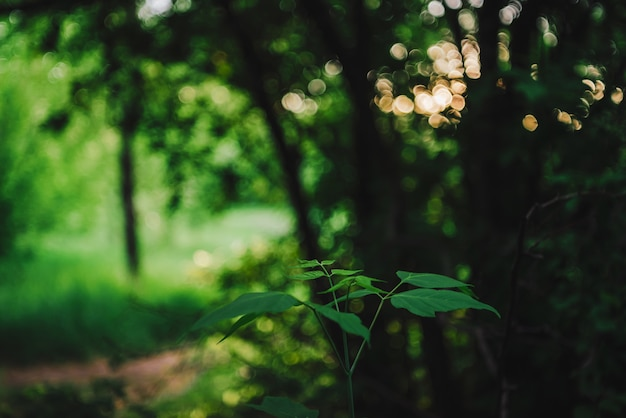 自然のボケ味の鮮やかな葉。コピースペースと日光の下で豊かな緑。晴れた日の緑豊かな葉のクローズアップ。バックライトの風光明媚な自然の緑。抽象的なテクスチャ。