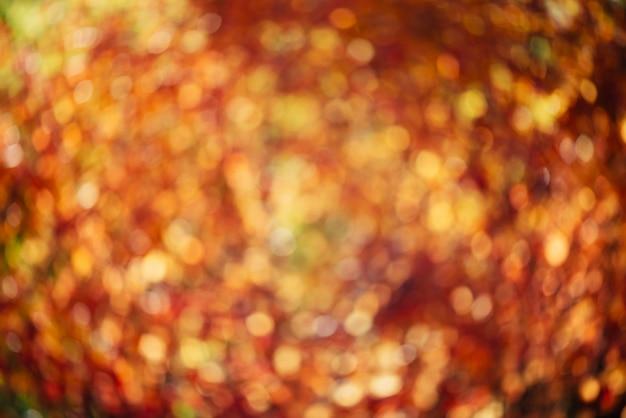 緑豊かな多彩な群葉のぼやけた質感。日没の多重自然秋背景。日の出のぼやけた自然秋の背景。多色ボケ。ゴールデンアワーの黄色オレンジ赤秋のパレット。
