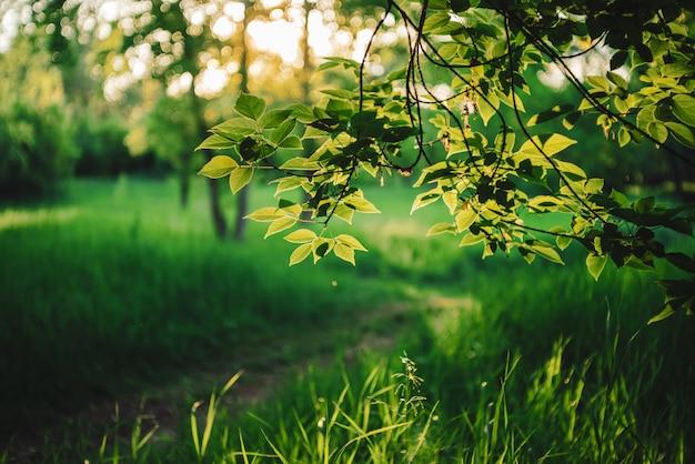 風光明媚な日当たりの良い自然の緑の背景。美しい葉のサンシャイン。木漏れ日と自然の素晴らしい朝の風景。コピースペースで晴れた日の豊かな緑。日光の下での植生の風景。