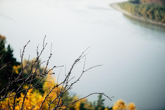 水の背景に落ちた葉を持つツリー。オレンジ黄色の秋の背景。葉のクローズアップのない木。裸の木の枝。風光明媚な秋の植物。美しい秋の自然。カラフルな自然の背景