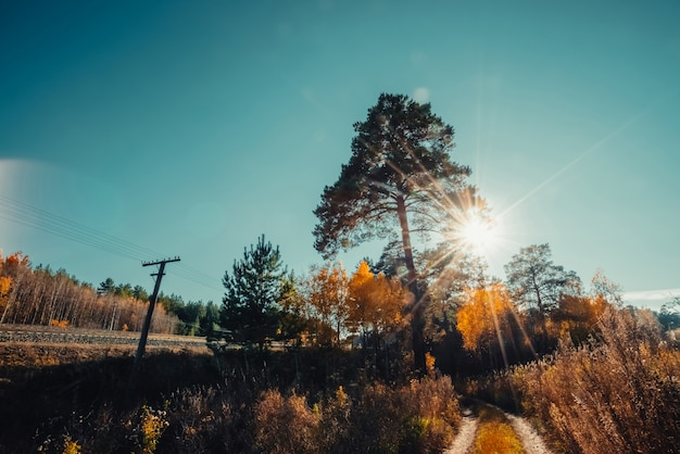 秋の森の早朝の素晴らしい景色。高い松の木の針を通してまぶしい明るい日光。太陽光線の豊かな秋の紅葉のきらめき。素晴らしい日の出。素敵な夕日の風景。