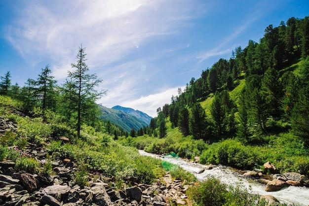 Лиственница растет на скалистом склоне. горный ручей в долине среди богатой растительности горной местности в солнечный день. гигантские горы за холмами с хвойными деревьями. удивительный ландшафт величественной природы.