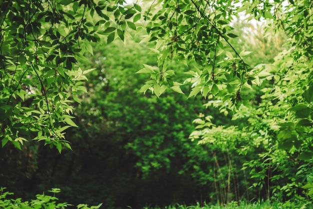 日光の下で鮮やかな茂みの後ろにぼかしで風光明媚な自然の緑の背景。カラフルな葉のクローズアップの背後にあるボケ味の美しい茂み。コピースペースで晴れた日に豊かな緑からぼやけた背景。