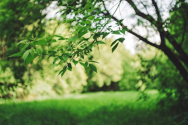 背景のボケ味の木の鮮やかな葉。コピースペースで日光の下で豊かな緑。晴れた日の緑豊かな葉のクローズアップ。バックライトの風光明媚な自然の自然な緑の背景。抽象的なテクスチャ。