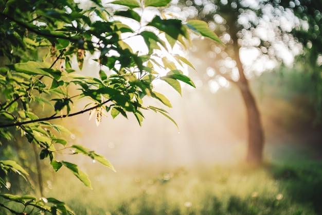 風光明媚な日当たりの良い自然の緑の背景。