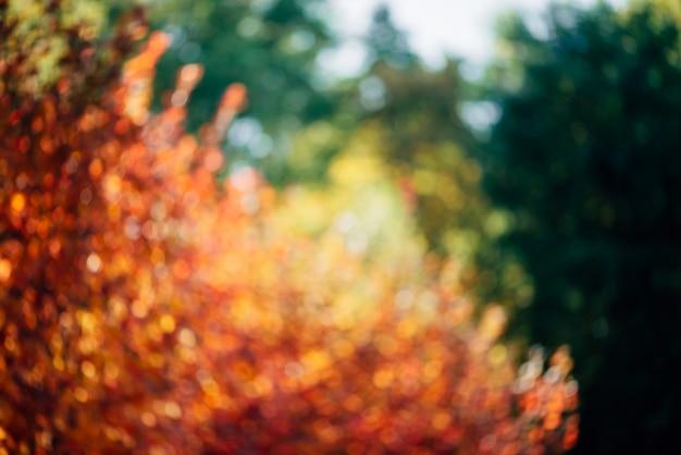緑豊かな多彩な群葉のぼやけた質感。