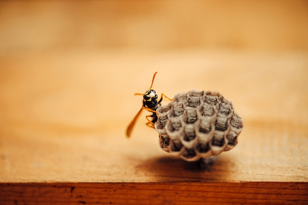 小さなハチが彼のハニカムをマクロで保護します。