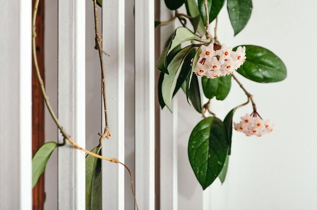 白い鉄の手すり階段に対する優しい花のほやの束。