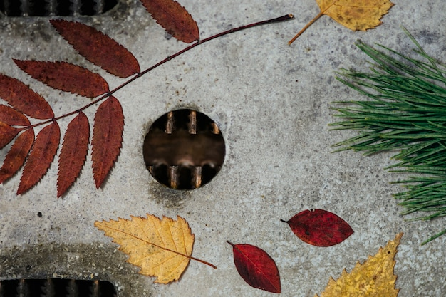 Яркий осенний гербарий, расположенный на металлической поверхности, поврежденной коррозией.