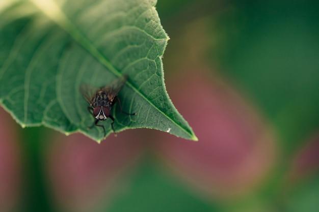 Черная муха сидит на зеленом листе растения.