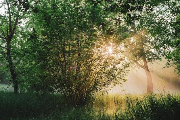 風光明媚な日当たりの良い緑の風景。日光の下で朝の自然の風景。日の出の木のシルエット。コピースペースを持つ葉に太陽光線とレンズフレア。夕日に木の葉を通して明るい太陽が輝いています。