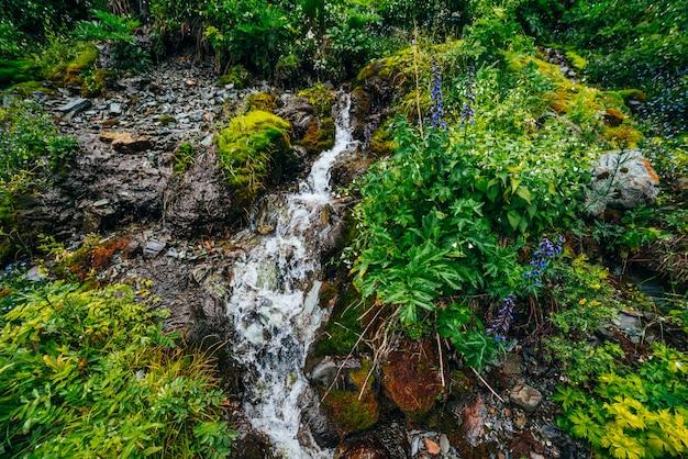 Живописный пейзаж с чистым родниковым потоком воды среди густого мха и пышной растительности. горный ручей на мшистом склоне со свежей зеленью и множеством мелких цветов. красочный пейзаж с богатой альпийской флорой.