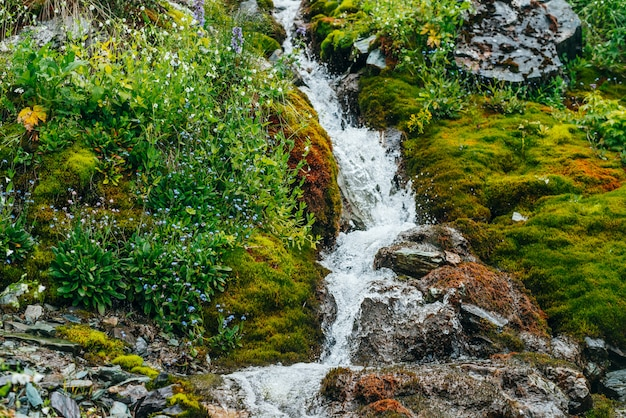厚い苔と緑豊かな植生に囲まれた澄んだ春の水の流れのある風光明媚な風景。新鮮な緑とたくさんの小さな花が咲く苔むした斜面のマウンテンクリーク。豊かな高山植物が咲き誇るカラフルな風景。