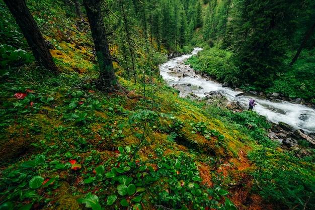 Красивая загадочная тайга с дикой рекой. живописная красно-зеленая флора. фотограф снимает горный ручей. мшистые скалы над горной рекой. яркие пейзажи лесной богатой растительности.