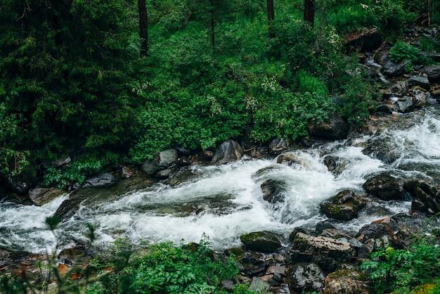 Атмосферный зеленый лесной пейзаж с горным ручьем. красивая загадочная тайга с дикой рекой. яркие пейзажи лесной свежести. густая зелень вдоль горной реки с порогами в тенистом лесу