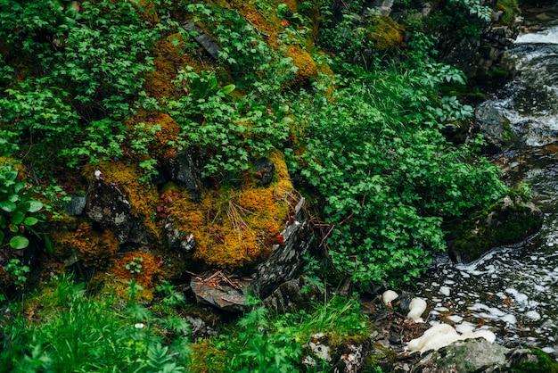 Яркие пейзажи лесной свежести. богатая зелень на замшелых скалах вдоль горной реки. красивая загадочная тайга с дикой рекой. горная флора возле горного ручья. атмосферный зеленый лесной пейзаж.