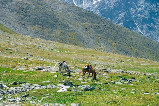 雪に覆われた大きな山の中で緑の高山草原に放牧の馬