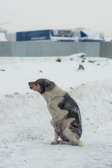 犬は寒さと絶望から吠えます。