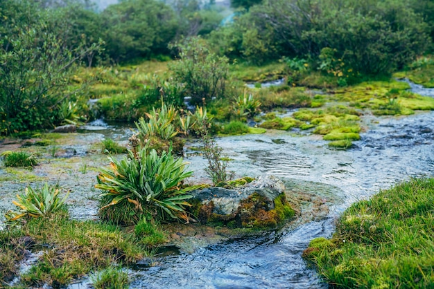 豊かな高山の緑と湧き水。