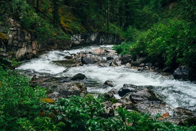 Атмосферный зеленый лесной пейзаж с горным ручьем.