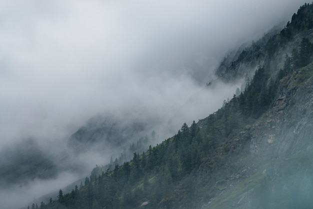 Туманный лес на скалах.