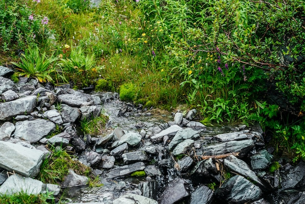 雑多な草の近くの山の澄んだ水の流れ。