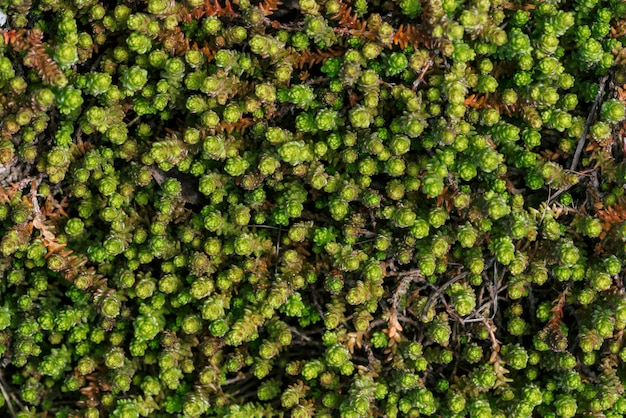 小さな緑の多肉植物が地面を覆った。