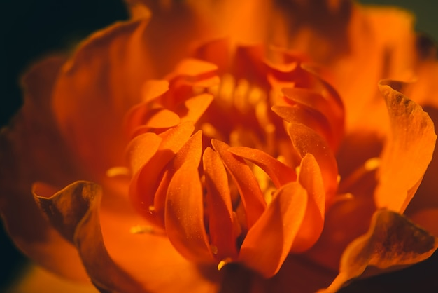 暗闇の中の燃えるような花の美しい暖かい芽