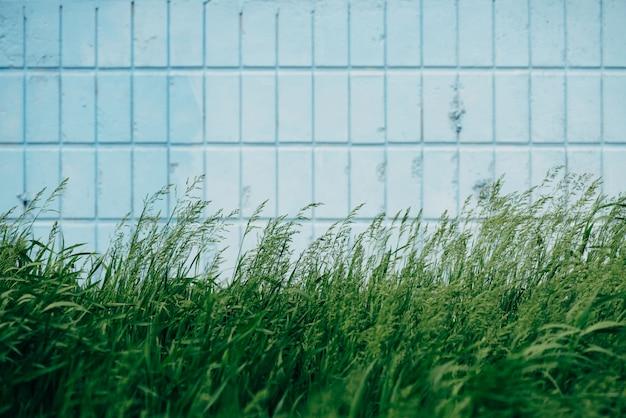草は青い長方形のタイルの壁に成長するクローズアップ。