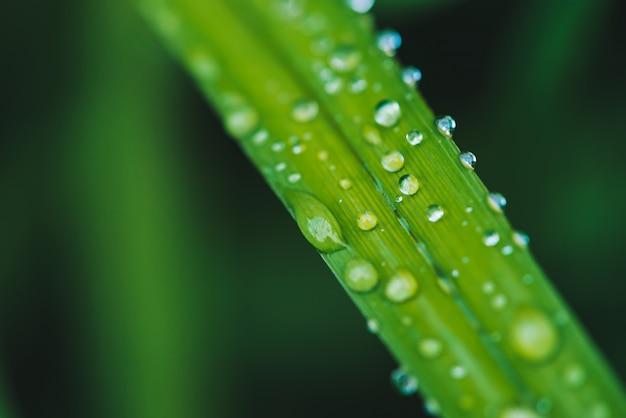コピースペースで露滴と美しい鮮やかな光沢のある緑の草が値下がりしました