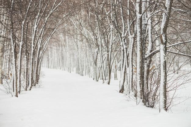 公園内の木の枝の間で雪に覆われたトンネルをクローズアップ