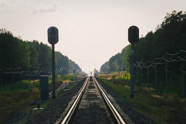 神秘的な列車は森に沿って鉄道で移動します