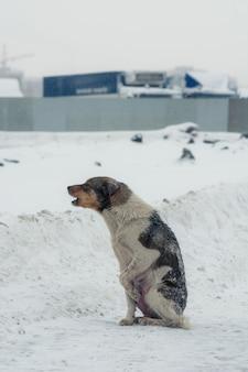 冬の絶望で貧しい放棄された犬。
