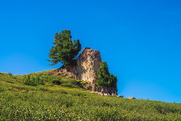 晴れた日に緑の丘の美しい岩石の上に素晴らしい杉が生えています。