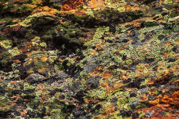 コケや地衣類の美しい岩の表面