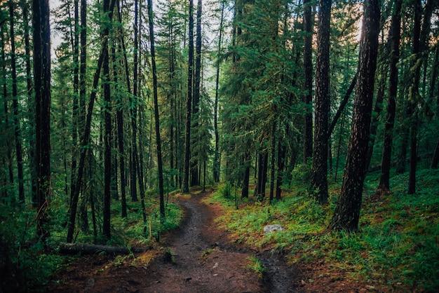 雨の森の中の濡れた小道