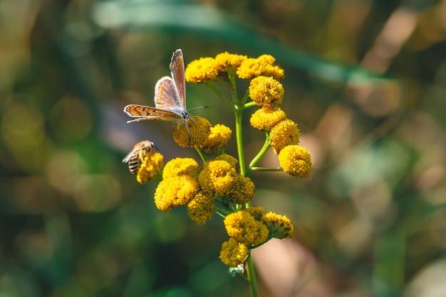 黄色の野生の花に小さなオレンジ色の蝶