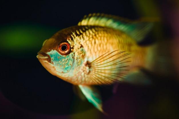 ナンナカラ水族館の魚