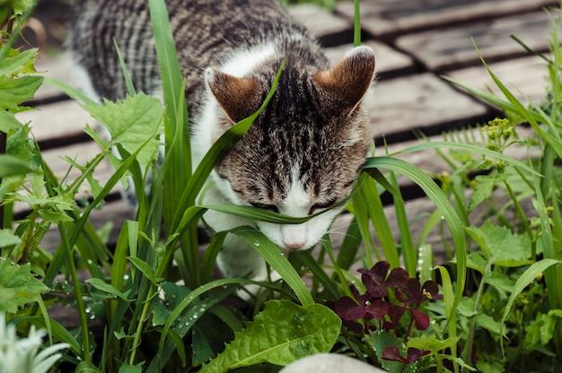 Полосатый кот в зеленой траве крупным планом