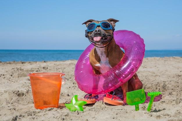ビーチでかわいい犬