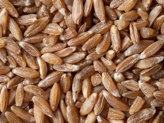 スペルト小麦の種子のトップビュー