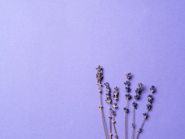明るい紫色の紫のラベンダーの花